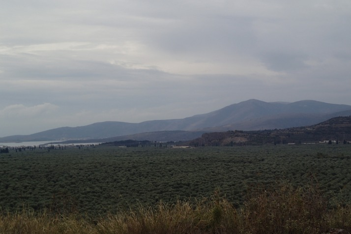 Thousands of acres of olives in the valley, owned by one family for generations