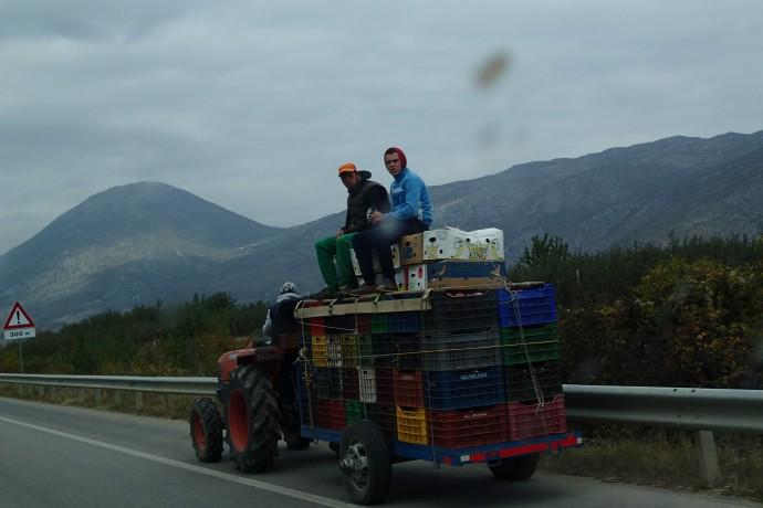 Albanian fruit pickers