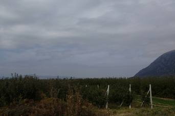 The apple orchards at Bilisht