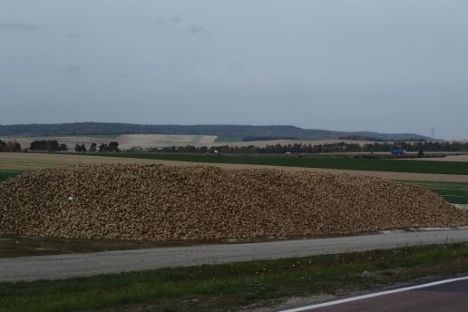 Potato crop, France