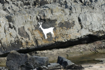 The mystical White Stag at Bamburgh, origins unknown