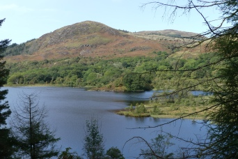 Loch Trool walk
