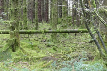 Kirroughtree Forest